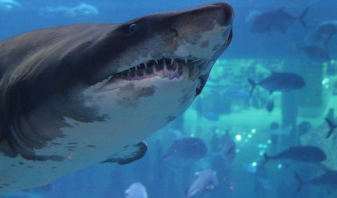 Dubai-Aquarium-mall-kinderen-grootste